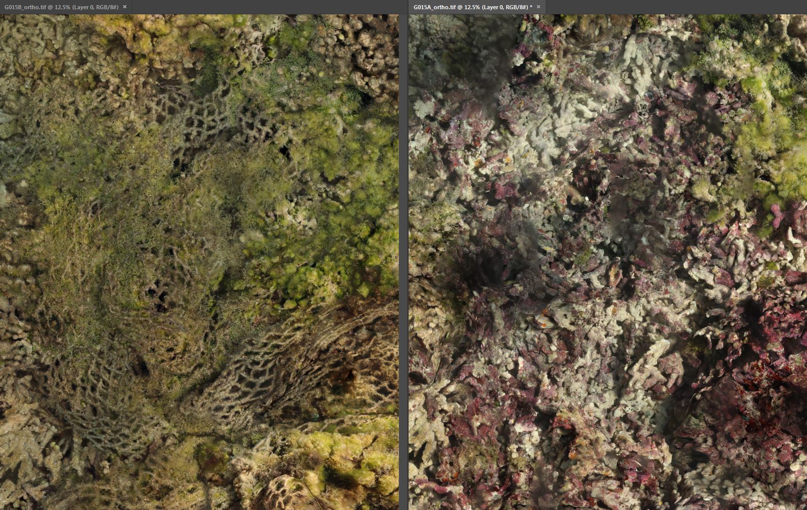 Structure from motion (photomosaic) images of a coral reef with the net in place (left) and after net removal (right).