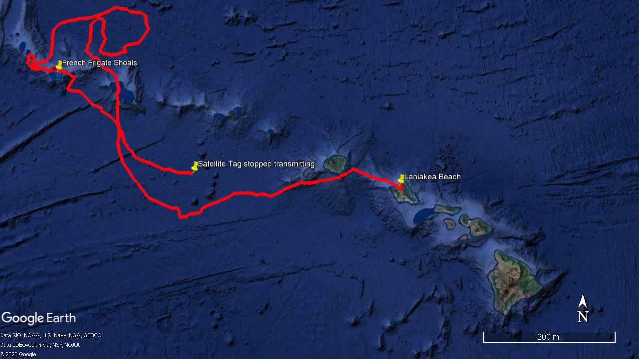 Track showing Punahele's migration from Oahu to the Northwest Hawaiian Islands and back