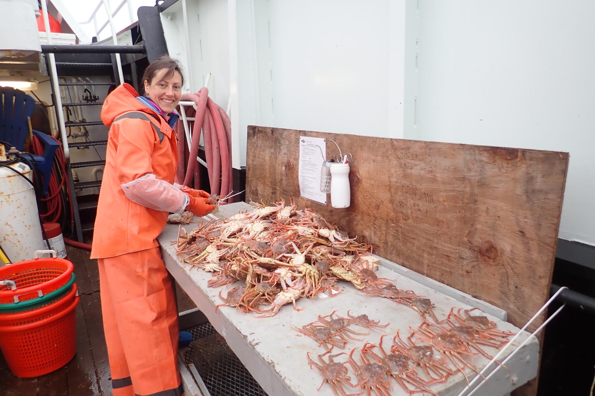 Photo of Erin Fedewa sorting snow crab on a boat deck.
