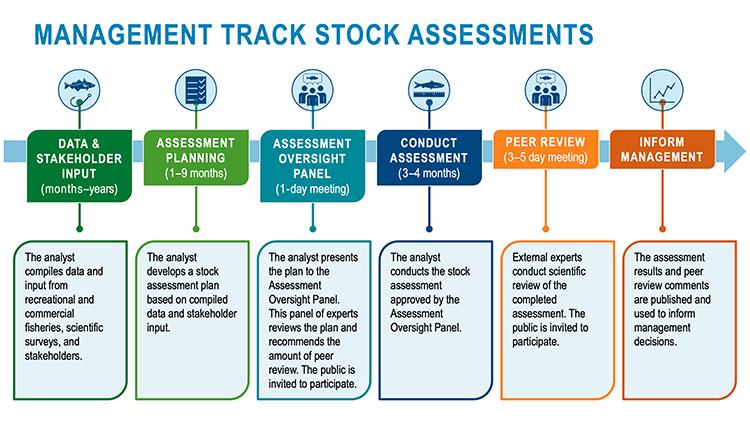 Timeline for management track assessments
