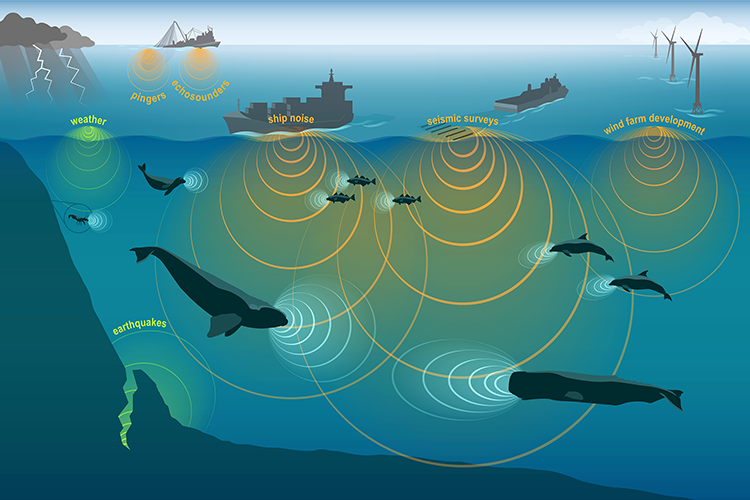 This conceptual illustration shows images of anthropogenic (human-created), biological (marine animal), and abiotic (environmental) sources of sound and approximately proportional sound waves. The sound sources include weather, earthquakes, snapping shrimp, harbor seal, Atlantic cod, right whale, sperm whale, common dolphins, fishing vessel, shipping vessel, seismic survey ship, and wind farm development. The sound waves are represented by overlapping colored circles that indicate the type of sounds.