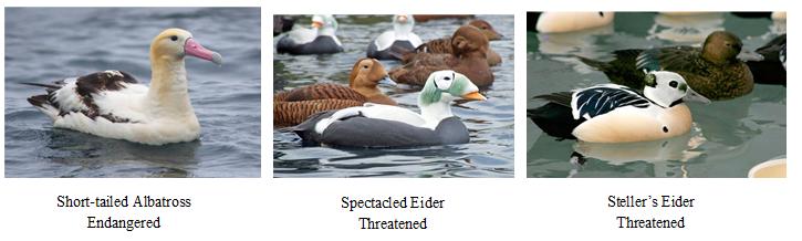 endangered and threatened seabirds of Alaska
