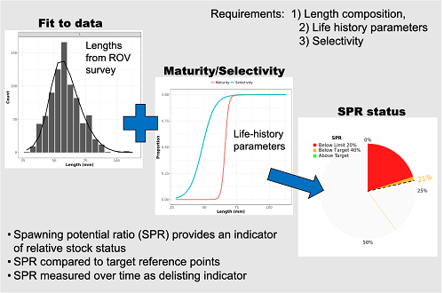 "Figure 7 shows the analytical process of calculating the status of a population using data-poor methods. The first uses the counts and size estimates of each species from the ROV survey. These estimates are then combined with maturity and selectivity estimates to estimate the ""length-based spawning potential ratio"". This ratio provides an estimate of the population's relative stock status compared to an unfished stock and allows managers to compare this indicator to target reference points related to ESA-li"