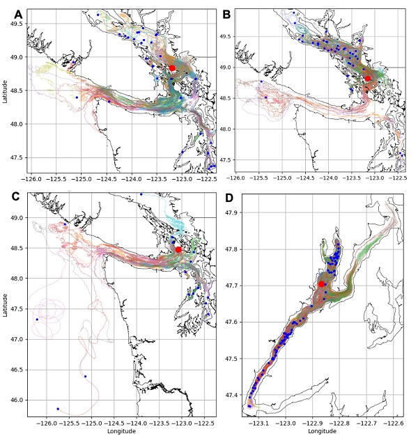 Four panels of larvae dispersal tracks. Top-left:dispersal pathways of canary rockfish larvae released from Salt Spring Island in the Strait of Georgia basin-shows a large amount of dispersal across basin boundaries, especially with the San Juan Islands. Top-right:dispersal pathways of yelloweye rockfish from Salt Spring Island in the Strait of Georgia basin-shows the vast majority of larvae dispersing further north and remaining in the Strait of Georgia basin. Bottom-left:dispersal pathways of canary rockf