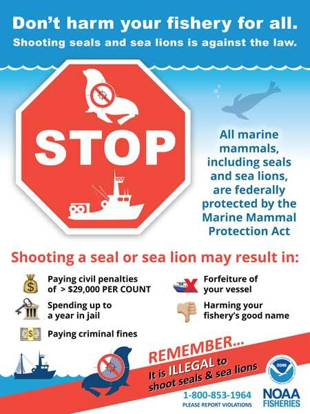 do not shoot seals and sea lions sign
