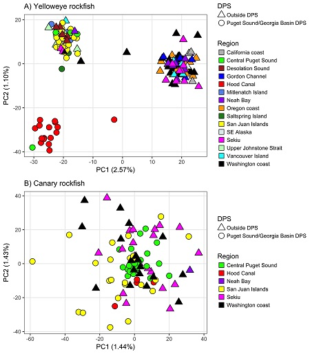 "The top panel of Figure 2 shows the results from a principal components analysis that reveals three population clusters for yelloweye rockfish, separating the inland waters of Puget Sound and the Georgia Basin from coastal waters, plus a separate cluster of individuals from Hood Canal, WA. The bottom panel of Figure 2 shows a ""shotgun"" pattern of samples completely overlapping each other, revealing no population structure for canary rockfish across sampled geographic regions. Each symbol represents an indiv"