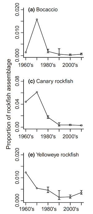 Figure 4 shows the proportion of Bocaccio, Canary rockfish and Yelloweye rockfish in the recreational catch of all rockfish over time from the 1960's to the 2010's. Each species proportion peaked in the 1960's or 1970's and declined to levels more than half their peak levels by the 2010's.