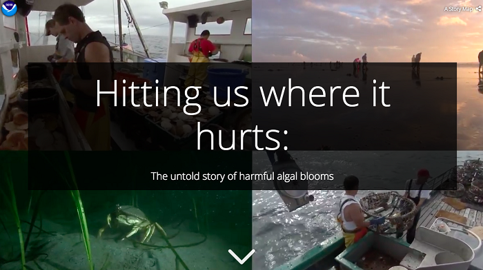 The title of the story map overlays a panel of four photos that depict subjects affected by harmful algal blooms. A Dungeness crab walks along the ocean floor. Scallop fishermen shuck scallops and Dungeness crabbers move crab pots on the decks of their respective boats. Recreational clam diggers search for clams on a beach.