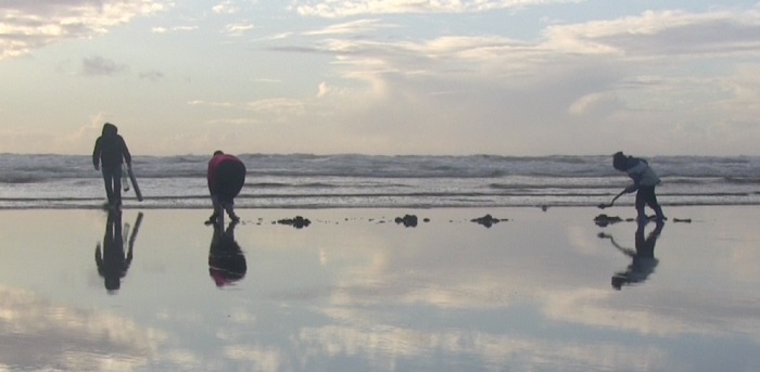 Razor clam diggers use shovels to dig for clams on a beach.