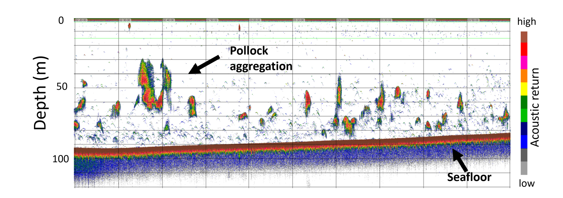 An echogram showing seafloor and Pollock aggregation depth.