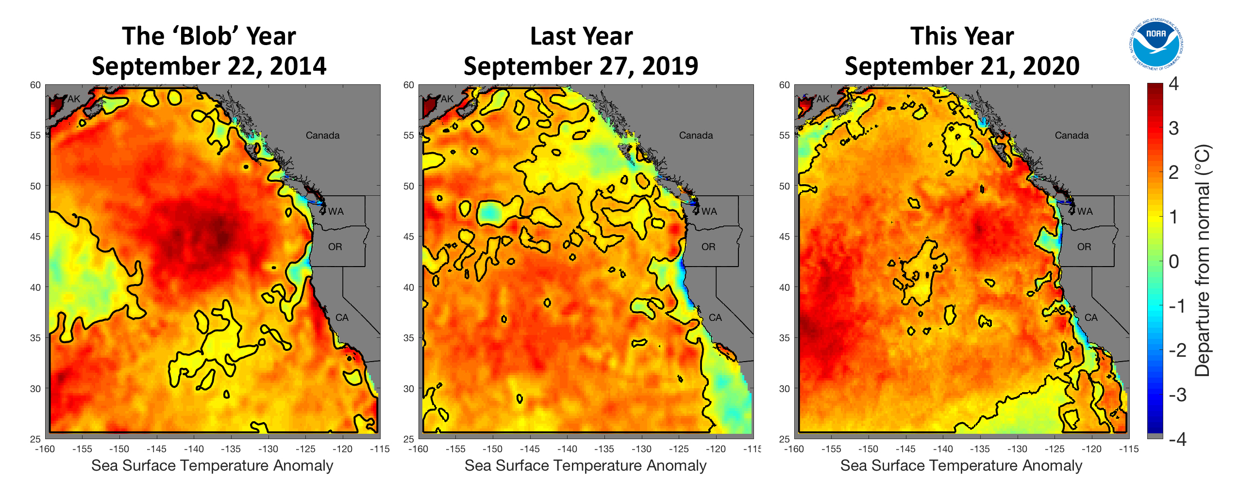 marine heat wave maps off the west coast in 2014, 2019 and 2020