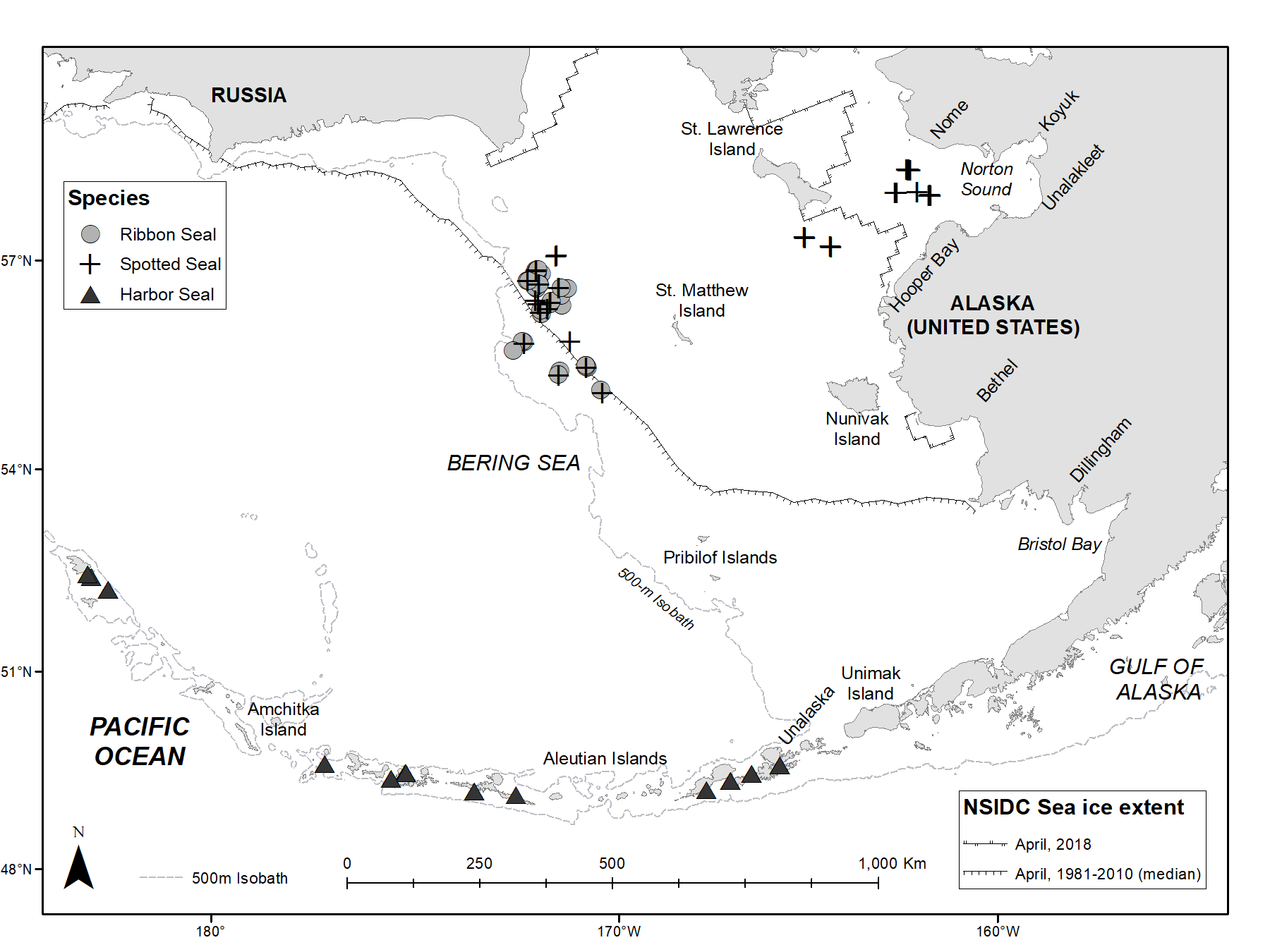 A map of the Bering Sea showing harbor seal, ribbon seal and spotted seal catch and release locations along with April, 1981-2010 median sea ice extent and April, 2018 sea ice extent.