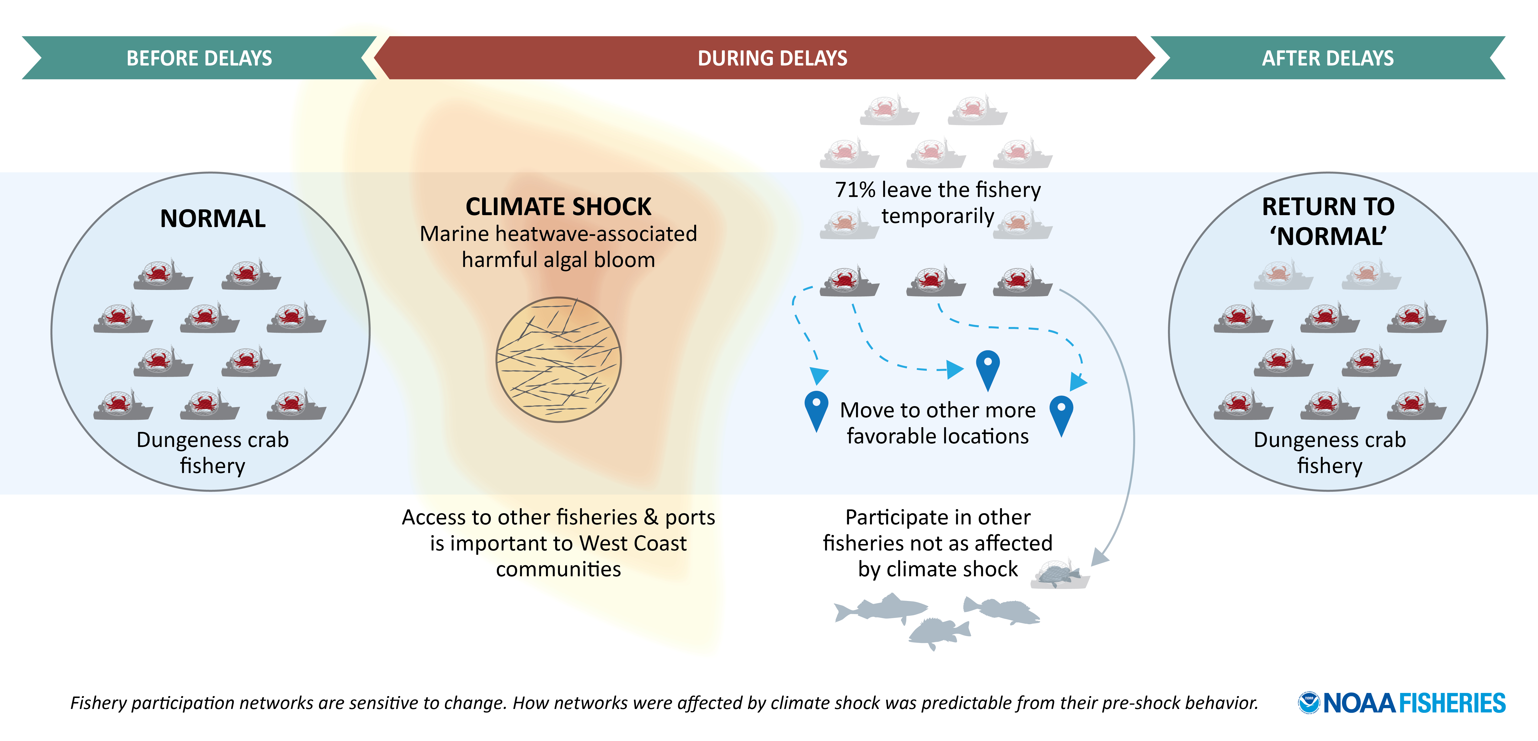 Dungeness crab fishery before, during and after the climate shock.