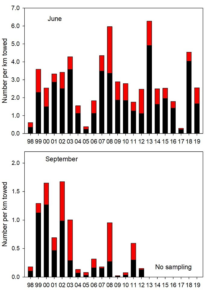 Figure JSC-01. Average catches of juvenile coho (black bars) and yearling Chinook (red bars) during trawl surveys off the coast of Washington and Oregon. Surveys were conducted in June (upper panel) and September (lower panel) from 1998 to present. Note the difference in the scale of the y-axis between plots.