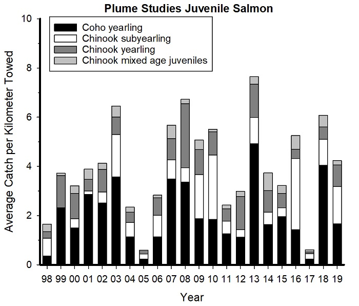 Figure JSS-03.  Annual variation in catches of juvenile coho and Chinook salmon during June trawl surveys, 1998-present.
