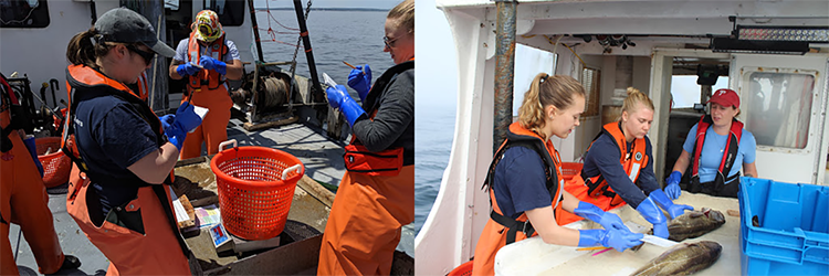 Observers candidates weighing fish on deck.(left)  Observer candidates measuring catch on deck.(right)