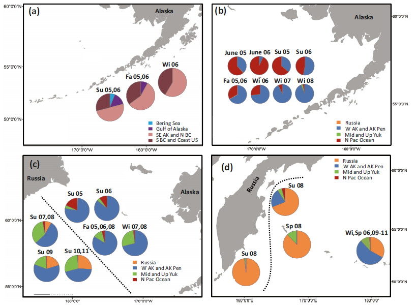 Four maps featuring the Gulf of Alaska and Bering Sea with regional Chinook salmon distribution pie charts.