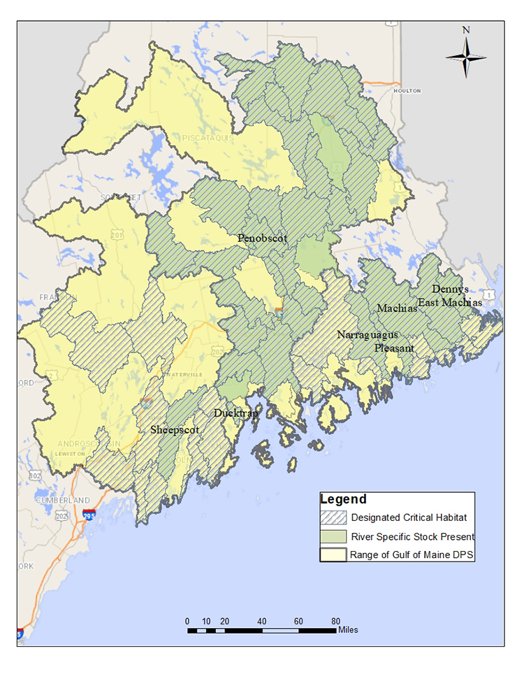 A map of Maine showing designated critical habitat for Atlantic Salmon and areas with river-specific stocks