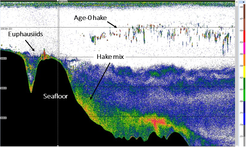 Echogram showing the hake and krill during a hake survey