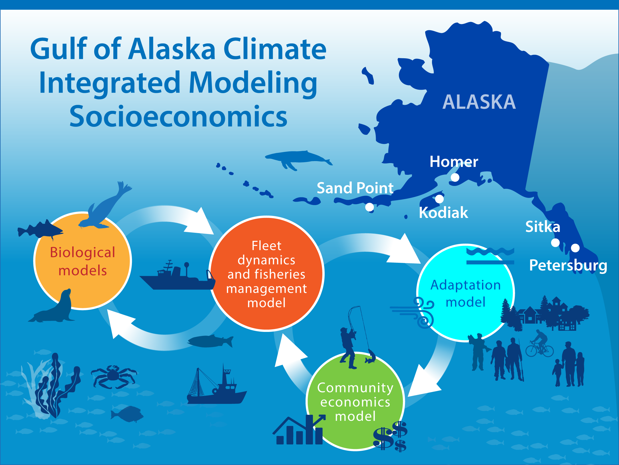 Infographic of the Gulf of Alaska showing biological, fleet dynamics/fisheries management, community economics and adaptation models.