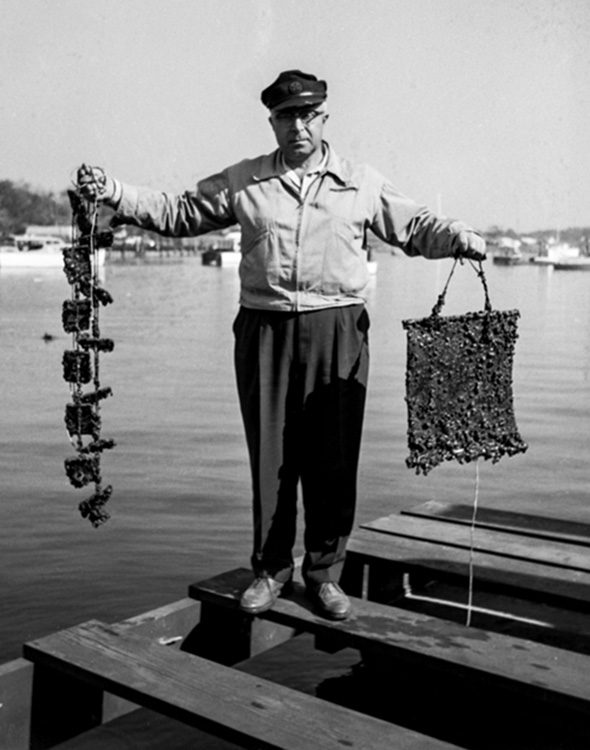 Loosanoff on the dock with some of his research,
