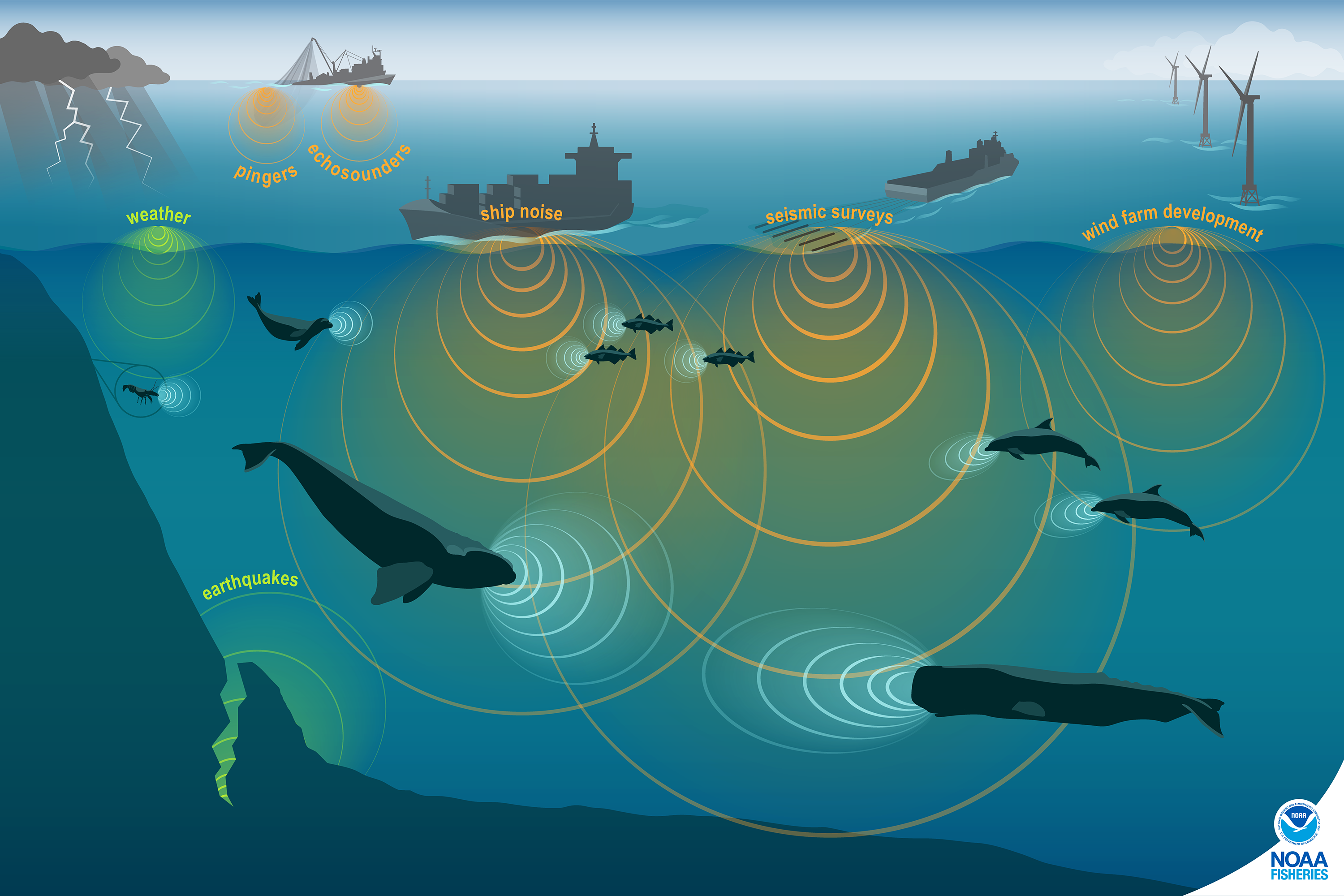 This conceptual illustration shows images of human, marine animal, and environmental sources of sound and approximately proportional sound waves. Soundscapes include sounds made by humans (anthropogenic; orange sound waves), the environment (natural sounds; green sound waves), and by biological sources (animals: marine mammals, fish, and invertebrates; blue sound waves).