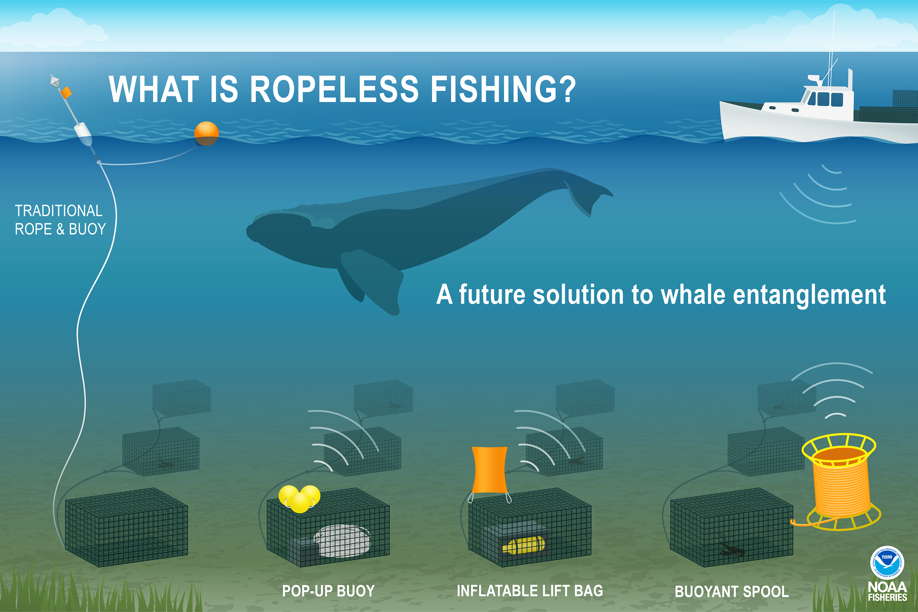 This illustration shows the rope and buoy system traditionally used for lobster fishing in contrast to three different types of ropeless fishing gear designed to prevent whale entanglement. A right whale is at the center, swimming safely above the ropeless systems on the ocean floor, each connected to a series of lobster traps, but toward an entanglement hazard posed by traditional fishing gear with a rope connecting the surface buoy above to lobster traps below. A lobster fishing boat is at the top right a
