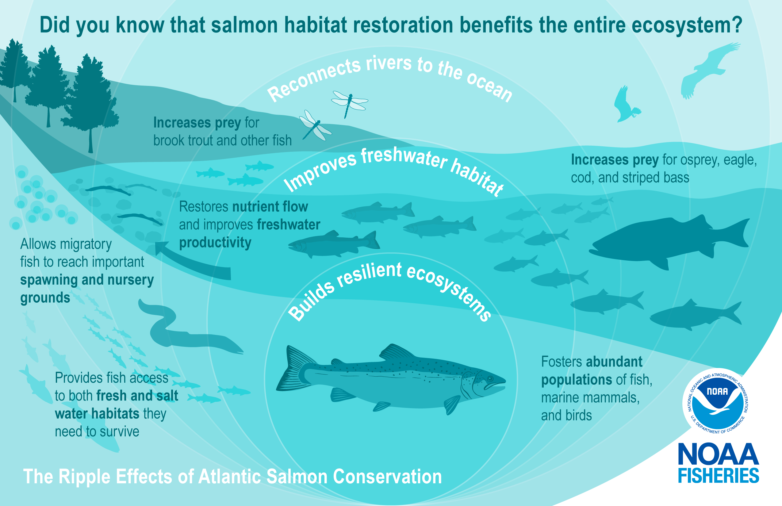 """This image is depicted in green colors and illustrates the science behind salmon conservation. It highlights examples of the """"ripple effects"""" and benefits for the environment with an illustration of expanding circles over a river connected to the ocean with an Atlantic salmon at the center. The salmon swims downstream to the right surrounded by a healthy ecosystem represented by fish eggs, smaller salmon, lamprey, dragonflies, an eel, and schooling rainbow smelt and river herring. In the background is an os"""