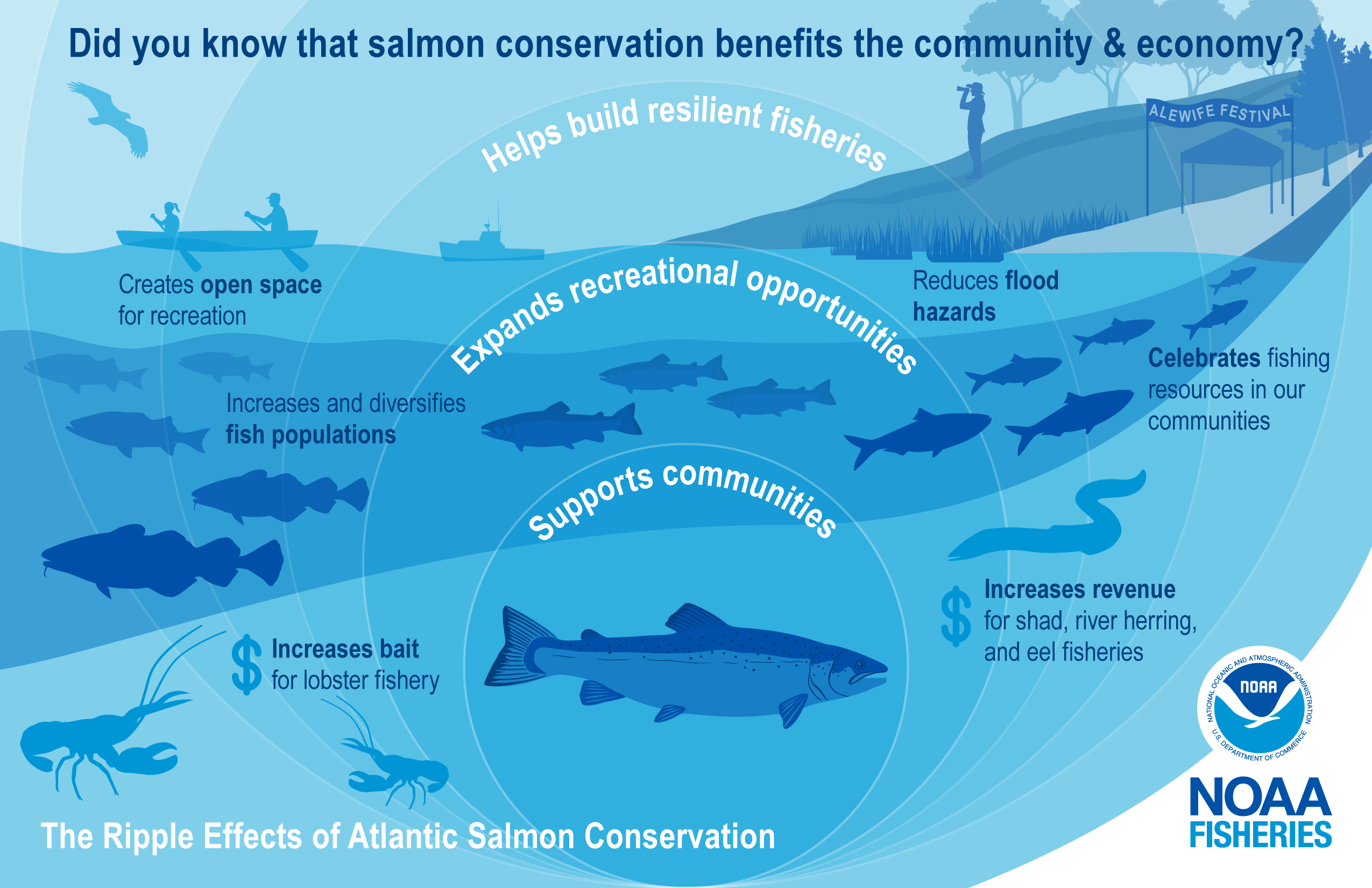 """This illustration is color-coded in shades of blue and shows the benefits of salmon conservation for the community and economy. It highlights examples of the """"ripple effects"""" with an illustration of expanding circles over a river connected to the ocean with an Atlantic salmon at the center. The salmon swims upstream to the right surrounded by a restored coastline represented by smaller salmon, schooling river herring, Atlantic cod, striped bass, lobsters, and an American eel. In the background is a lobster"""