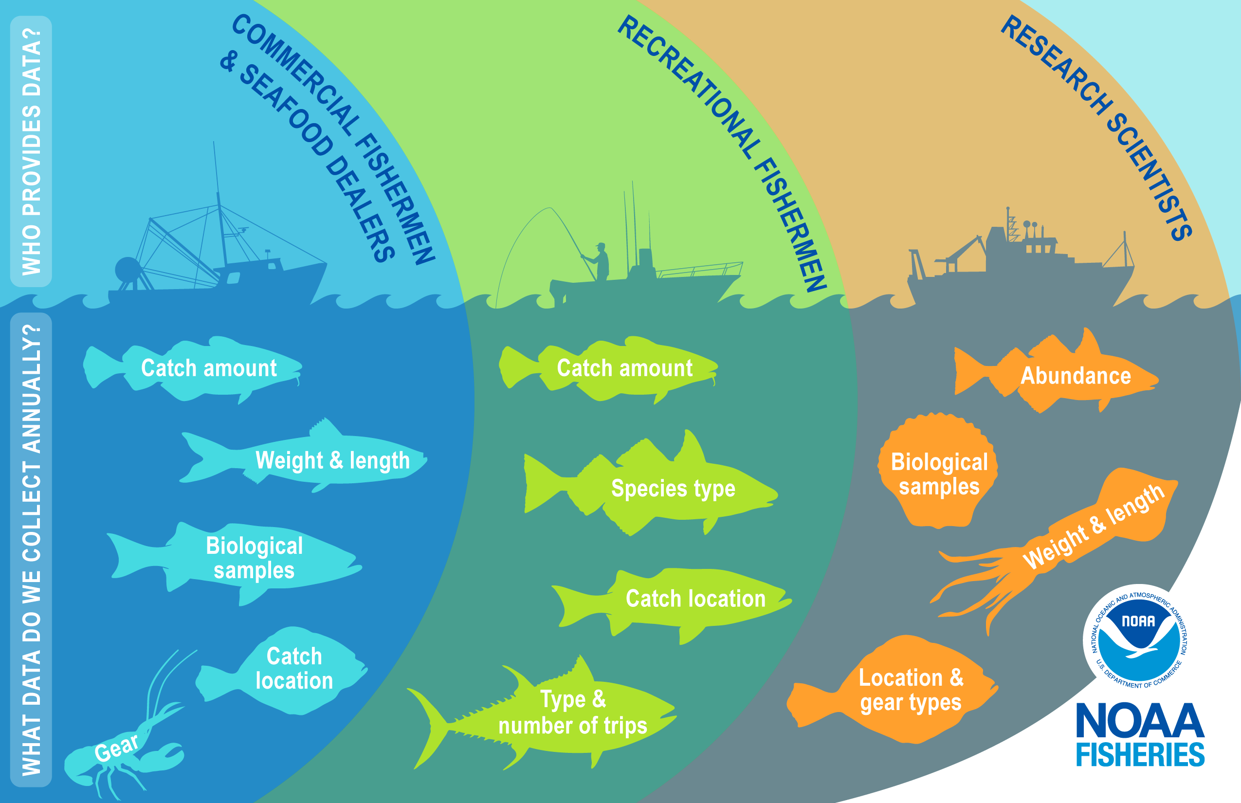 Who collects fisheries data? What data do we collect annually? This image has three sections in overlapping colored circles showing that fisheries data is collected by commercial fishers and dealers, recreational fishers, and research scientists with a corresponding drawing of a vessel silhouette for each sector. The three sections show the different types of data collected annually by each sector with icons of marine species including Atlantic cod, Atlantic herring, striped bass, flounder, lobster, black s