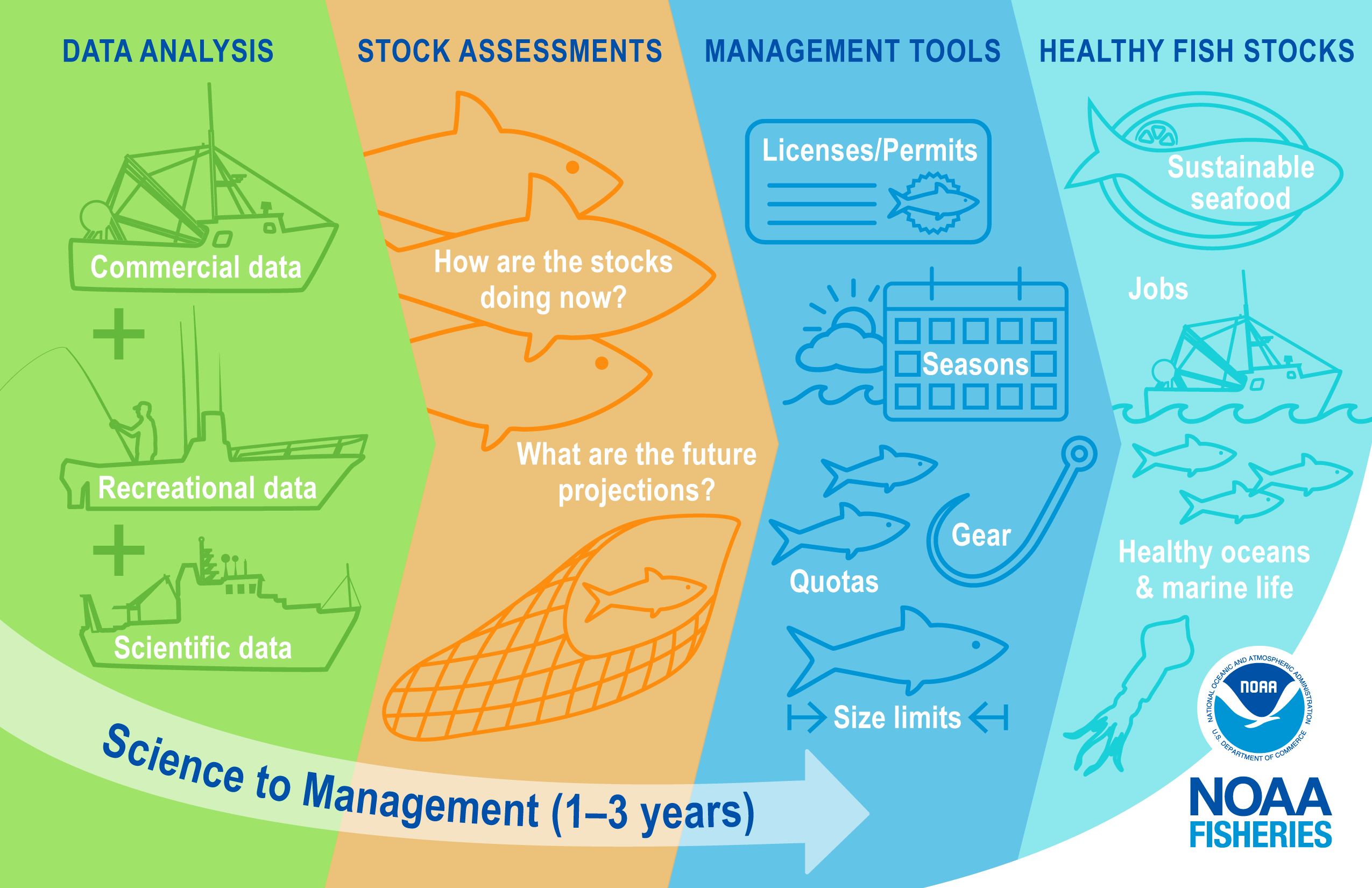 """Science to Management The second image has four sections with arrows to show the progression from data analysis to stock assessments to management advice to healthy fish stocks. Commercial data, recreational data, and scientific data inform stock assessments and are represented by outlines of the three different types of vessels. Stock assessments answer questions including, """"How are the stocks doing now?"""" and """"What are the future projections?"""" and this section has outlines of fish and a fishing net. Stock"""