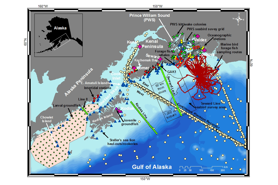 Map of different sampling programs and area details in the Gulf of Alaska.