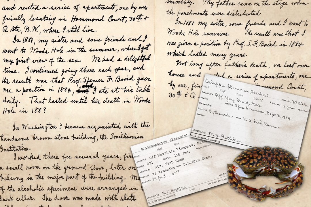 Collage graphic of handwritten memoir page, specimen identification cards, image of a flame crab