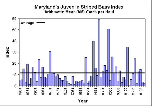 Graph of Maryland's Juvenile Striped Bass Index from 1954 through 2020