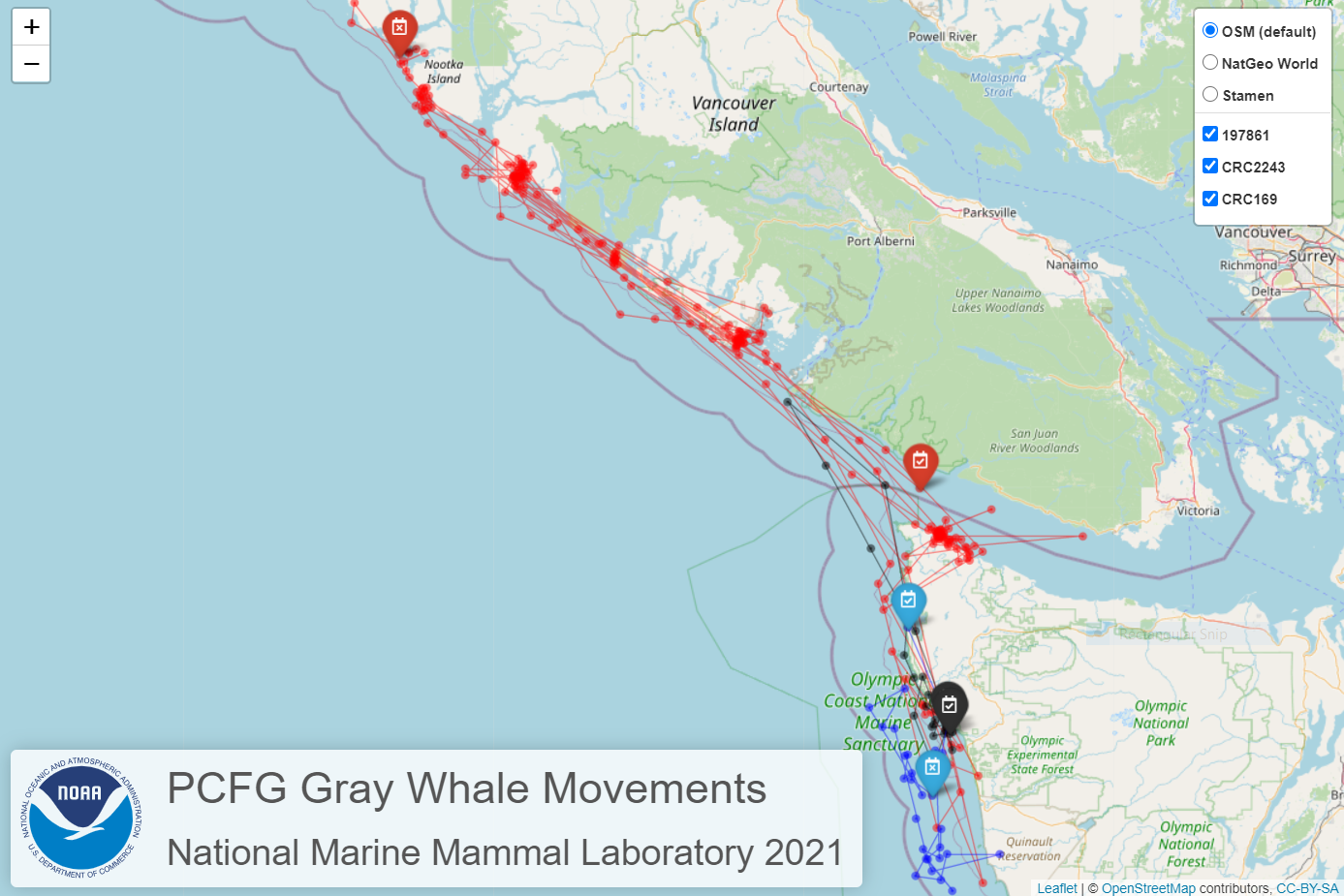 Interactive gray whale tracking map still showing movement tracking of three gray whales off the coast of Washington State and British Columbia, Canada.