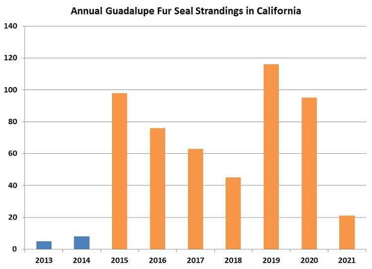 Graph of Annual Guadalupe Fur Seal Strandings in California