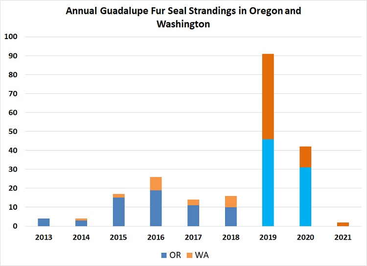 Graph of annual Guadalupe fur seal strandings in OR and WA.