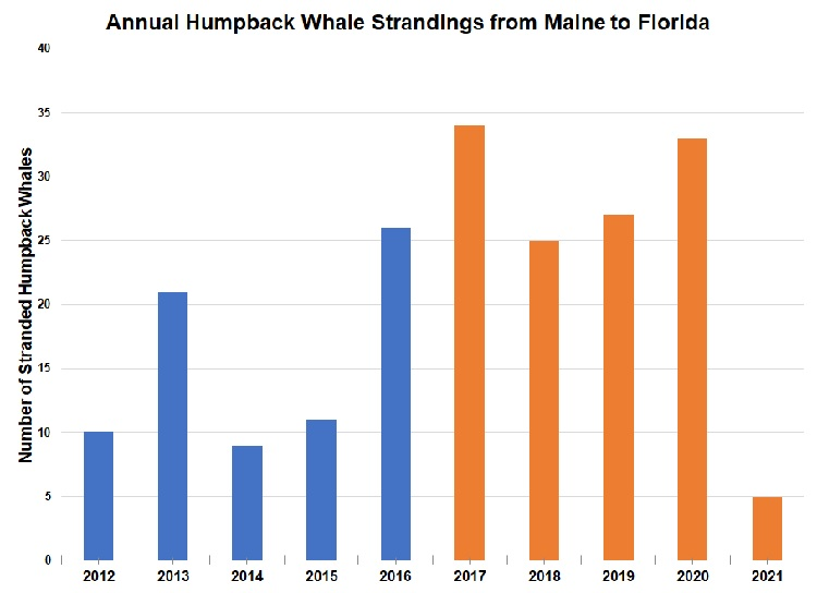Graph of annual humpback whale strandings from ME to FL.