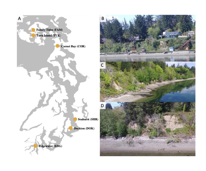 (A) Site map and (B) sample images of armored, (C) natural, and (D) restored sites.