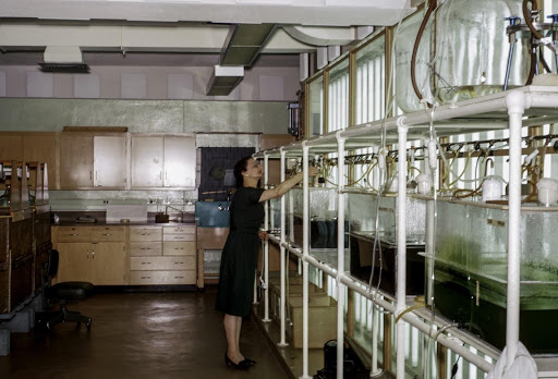 Rita in the lab checking cultures.