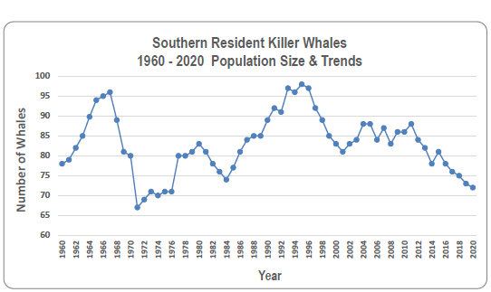 Line graph showing rise and fall of the SRKW population