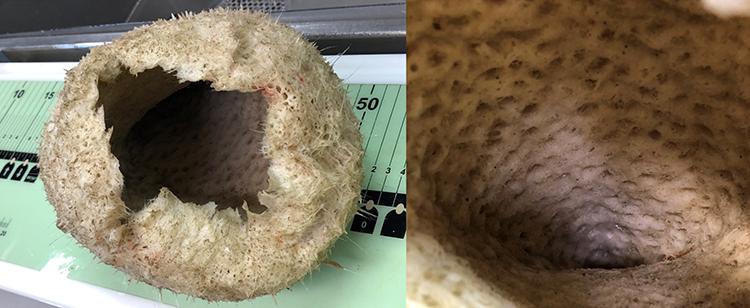 a sponge and a close-up of its cave-like inside