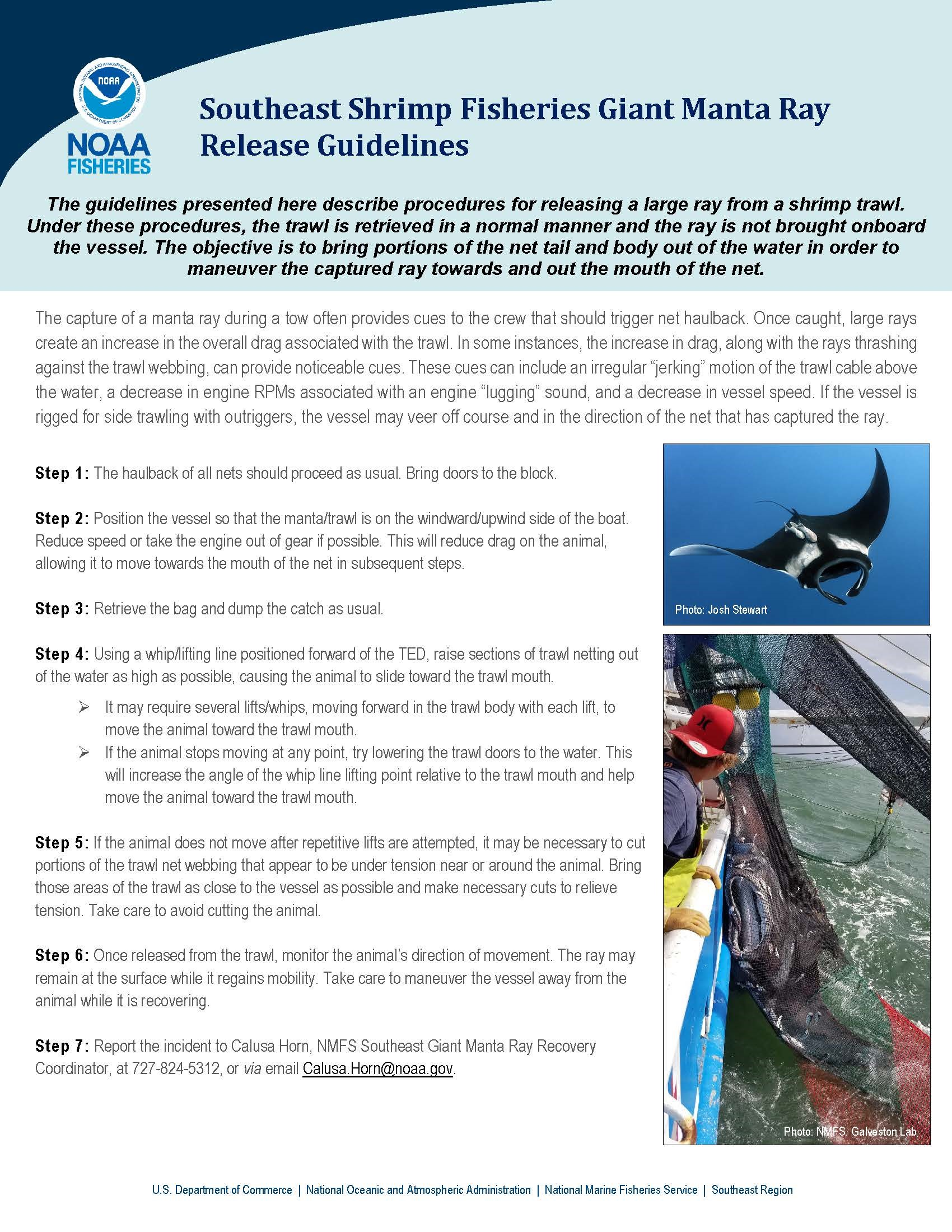 Infographic illustrating giant mantra ray release guidelines