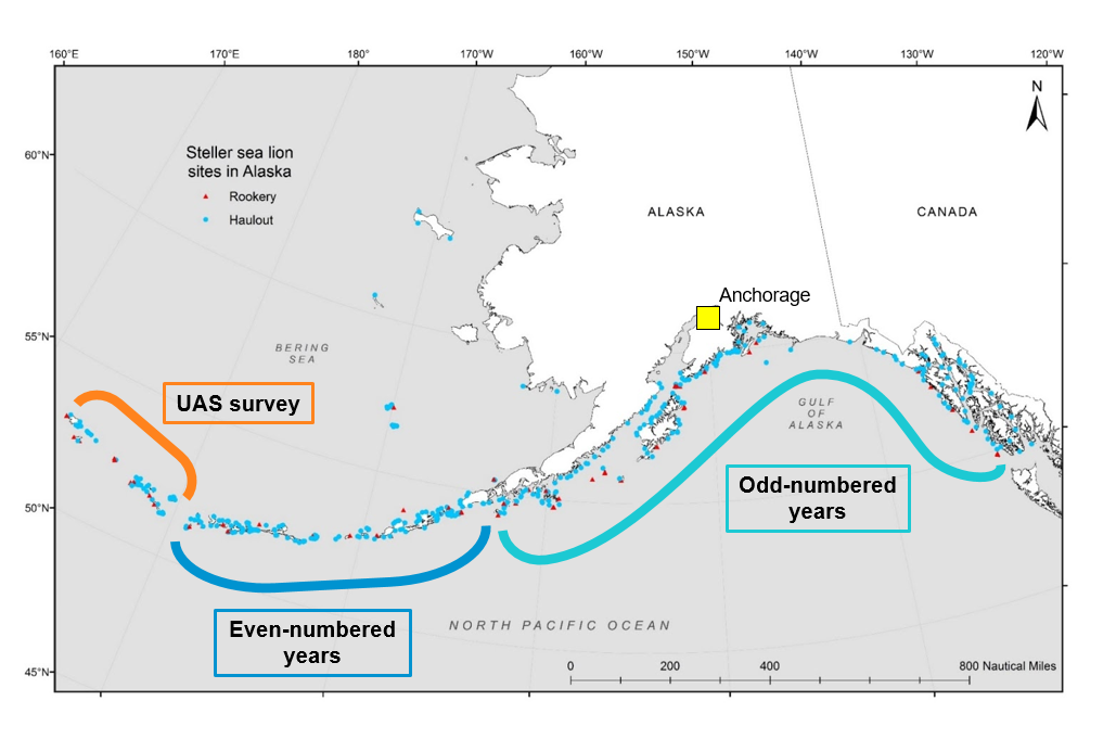 Map of Alaska showing the UAS Aleutian Islands survey area, even-numbered years manned survey area in the Aleutian Islands, and the odd-numbered years manned survey areas in the Aleutian Islands and southeast Alaska.