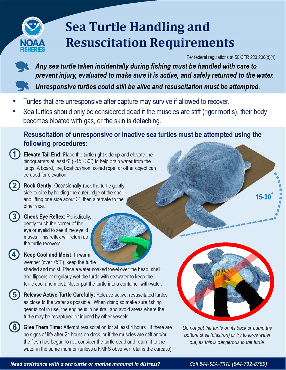Infographic illustrating proper sea turtle handling and resuscitation requirements