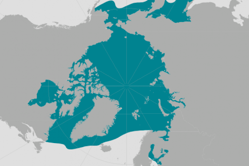 World map providing approximate representation of the ringed seal's range.