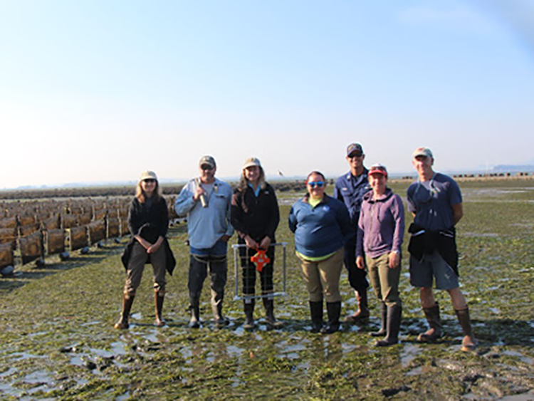 Team members from the Northeast and Northwest Fisheries Science Centers standing on a mudflat alongside an array of  hanging oyster aquaculture bags at the Taylor Shellfish Farm in Samish Bay, Washington in 2018.