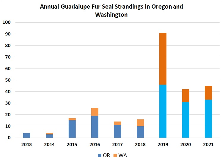 Annual Guadalupe Fur Seal Strandings in OR and WA
