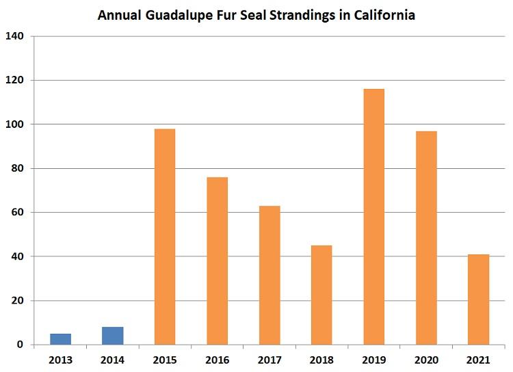 Annual Guadalupe Fur Seal Strandings in California