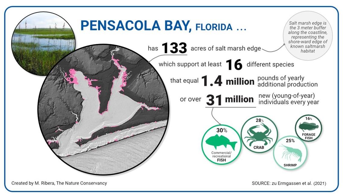 Fish production rates in salt marsh in Pensacola, Florida